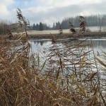 Zahájský rybník
