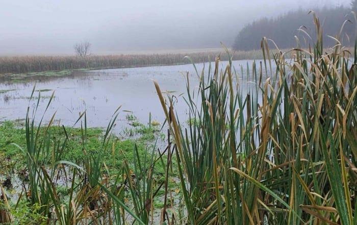 Švomův rybník